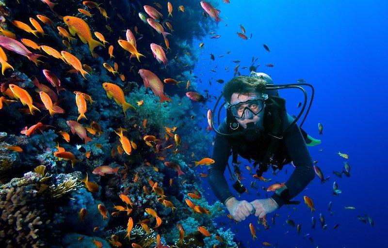 Diving in Samaná