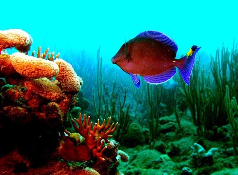 Puntilla Reef