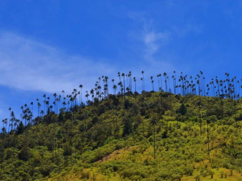 Valle-de-cocora-kolumbien