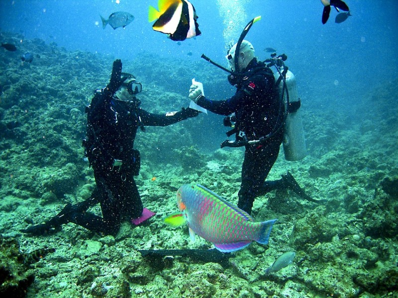 Reef Sea Diving Scuba Underwater Ocean Divers